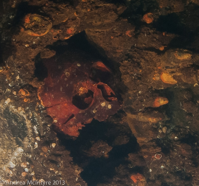 Skull embedded in the engine room ceiling - Yamagiri Maru